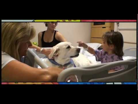 Animal Assisted Therapy at Phoenix Children's Hospital