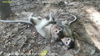 Monkeys and baby monkeys are funny animals, lovely Michea and Chase enjoy playing funny, Mila troop