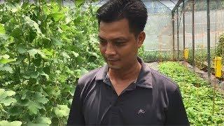 Nông trại xanh bền vững sử dụng phân trùn quế trồng dưa lưới tại Cần Thơ