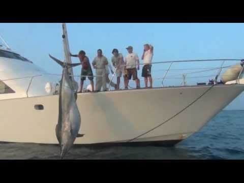 1038lb Black Marlin Caught, Nov 23 2011 - Little Audrey Game Fishing Charters