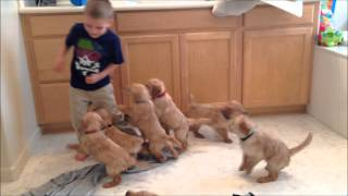 The 9 Puppy Chase & Tackle || Family Fun Pack Puppies