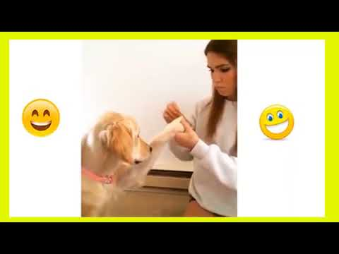 Funny Animals video | Viral Videos | Funny Videos | Emboss Funtime