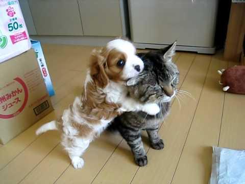 対照的な二匹が微笑ましい♪ じゃれる子犬と耐える猫