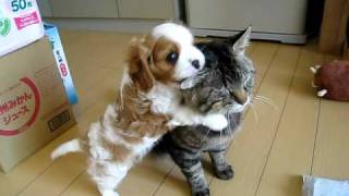Շնիկը սիրահարվել է կատվին