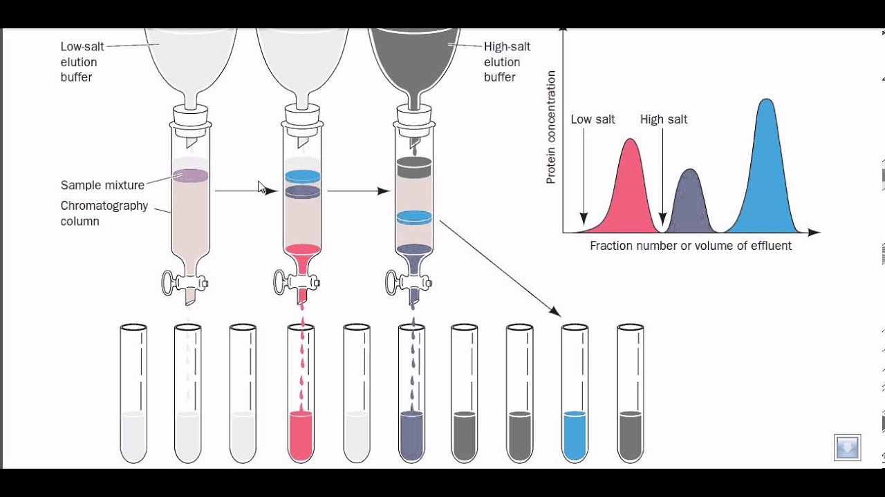 Ion Exchange Chromatography Images Ion Exchange Chromatography