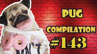 Pug Compilation 143 MIX  - Funny Dogs but only Pug Videos | Instapug