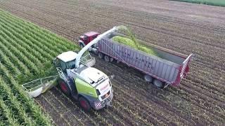 Stone Ridge Dairy Chopping Corn Silage