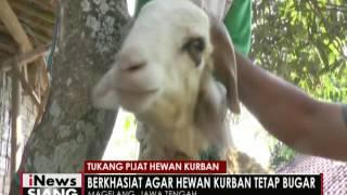 Jelang Idul Adha, tukang pijat hewan kurban di Magelang kebanjiran order - iNews Siang 08/09