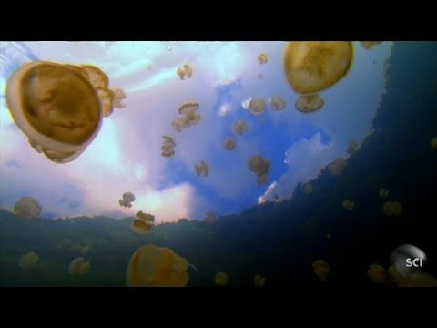 Synthetic Jellyfish and the Definition of Life | Futurescape