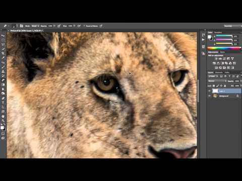 Photoshop Playbook: Fixing Pet-Eye & Making Text Bubbles