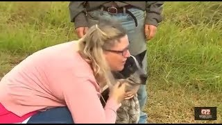 Dog protects lost 3-year-old girl