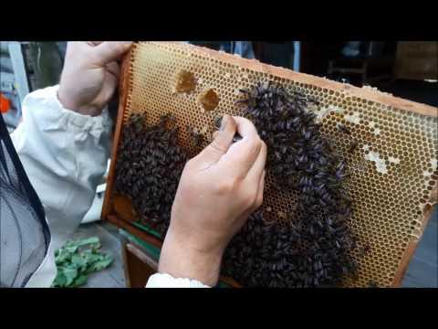 0 - Їмо стільники з медом і воском