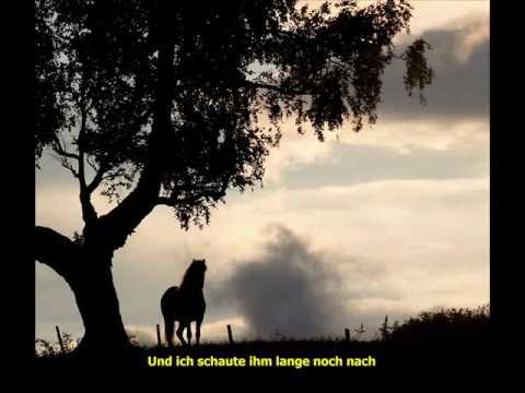 Rantanplan - Unbekanntes Pferd