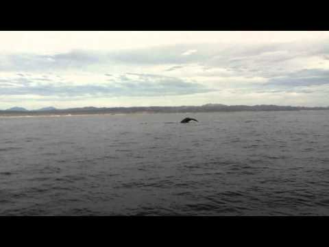 Whales pass by us fishing near San Jose del Cabo, Baja, Mexico