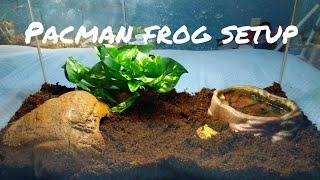 All Clip Of Albino Pacman Frog Setup Bhclip Com