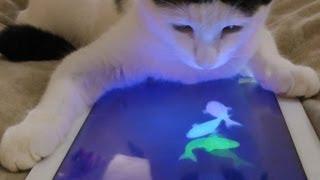 Cat is iPad genius