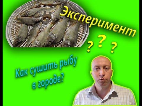 Сушим рыбу в сушилке для овощей эксперимент