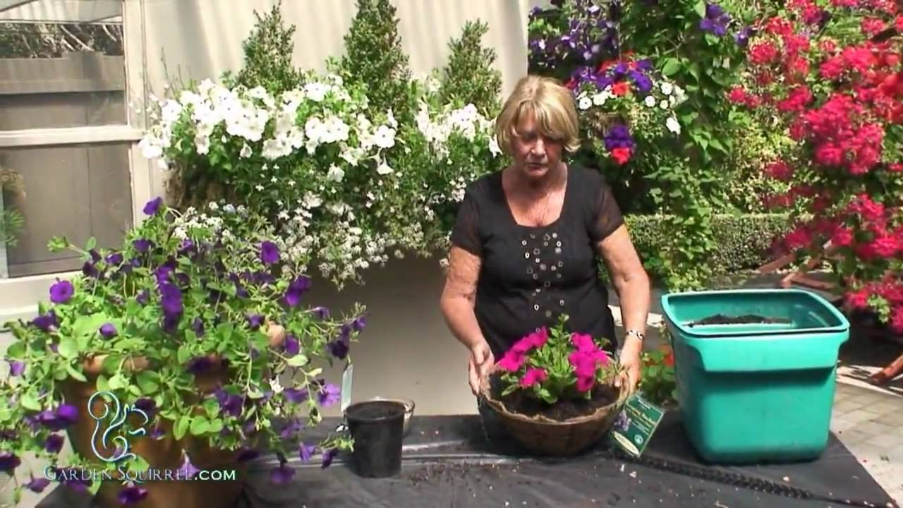 How to make a hanging basket of petunias easy youtube for How to hang flowers