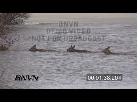3/25/2009 Oxbow, North Dakota Flooding - Part 2 stock video