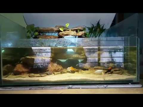 Fresh Waterfall aquarium