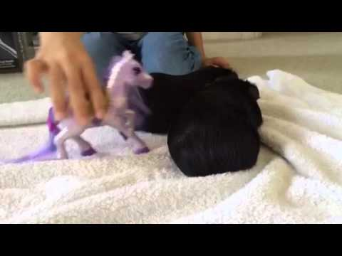 Victoria Shnaper Guinea pigs movie