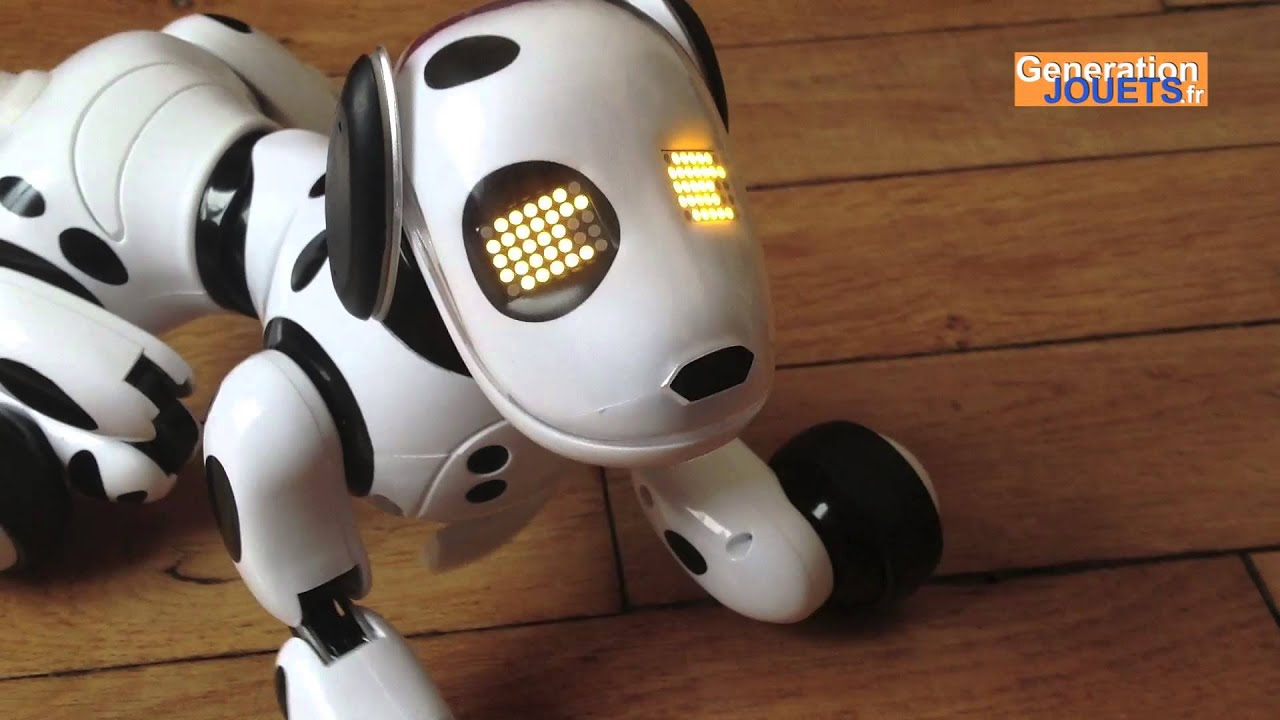 Coup de Coeur de Paul : Zoomer le chien robot - YouTube