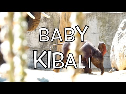 Best Of Baby Kibali & Mama Numbi. Afrikanischer Elefant (Loxodonta africana) Lumix dc-fz82 Superzoom