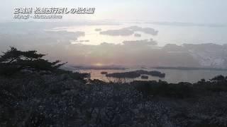 【日本の桜】宮城県 松島・西行戻しの松公園
