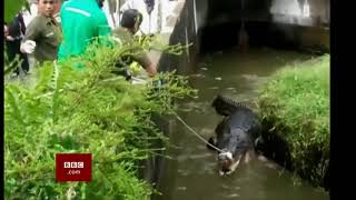 Woman mauled to death by pet crocodile (Indonesia) - BBC News - 17th January 2019