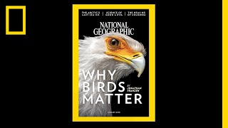 130 Years of National Geographic Covers in Under 2 Minutes (Video)