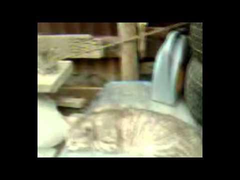 Моя кошка Марго v 2.0