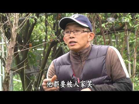 台綜-農夫與他的田-20160314 山丘上的橘子香