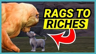 Mr Chow Chow & Scooby Doo have puppies! - 🌴 Rags to Riches (Part 24)