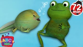 Frog Song + More Nursery Rhymes & Kids Songs - CoComelon
