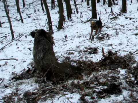 Pes - Společný lov