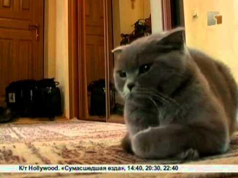 Зверская жизнь.Как воспитать кошку