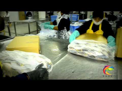 Gondi Proceso de congelacion del pescado