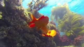 Catalina Island California ocean animals freediving montage