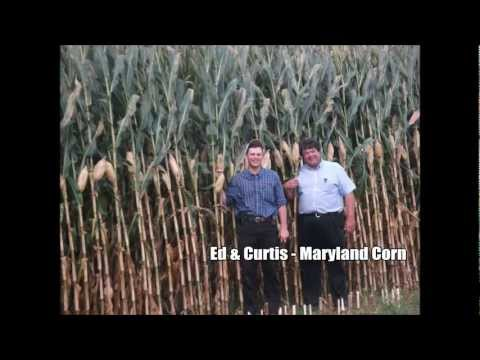 Increasing Corn Yields -- Pro-Soil