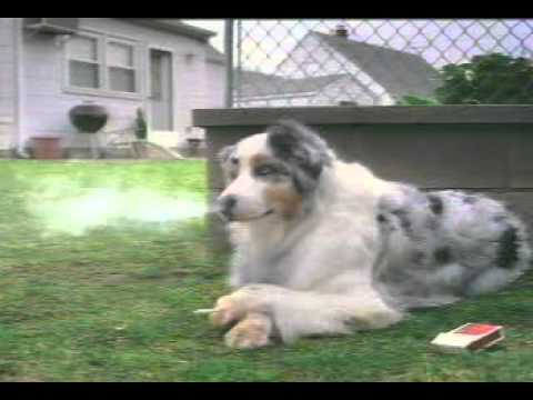 Smoking-dog Funny Videos Doug 4tube video