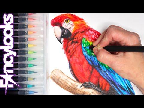 Cómo dibujar loro realista con rotuladores acuarelables - paso a paso
