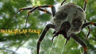 conseguir las 100 skulltulas gold zelda ocarina of time