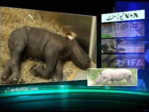 Urdu Newsminute 5.31.13