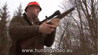 Wild Boar Hunting in Hungary, the Best Driven Hunt in Zala County (HD)