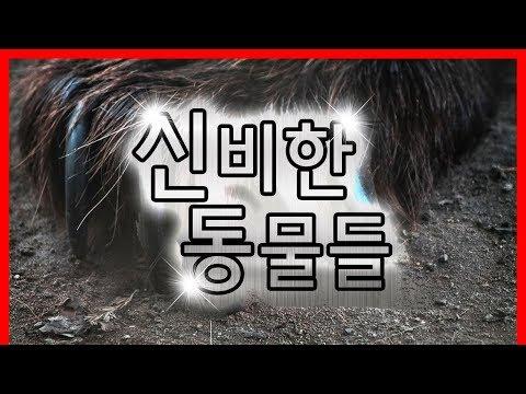 영화보다 더 신기함 ㄷㄷ 레알 신비한 동물들 |빨간토마토