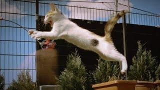 TRENDING FUN: [Betisier] Compil Chutes et fail de chats ! (compilation gag falls cat) !