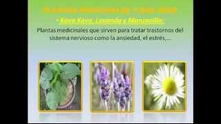 Plantas  Medicinales Y Sus Usos - Descubre Y Aprovecha Las Plantas Medicinales Y Sus Usos O Uso