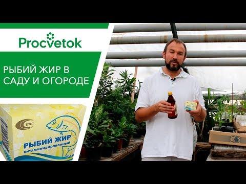 Фитофтора томатов и картофеля. Как лечить фитофтороз?