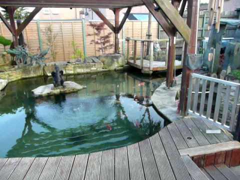 Covers Come Off Koi And Sturgeon Pond Youtube