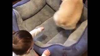 Naughty little boy playing with his dog